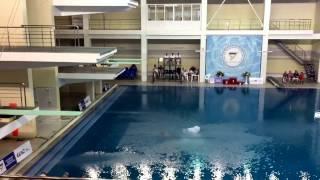 Чемпионат России 2016/по прыжкам в воду/вышка/мужчины