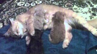 Котята 10 дней kittens 10 days
