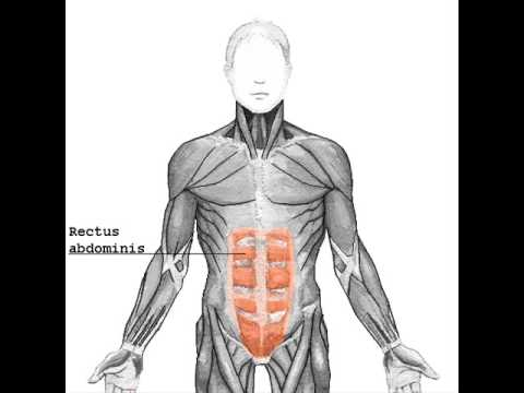 guys how to work out rectus abdominis