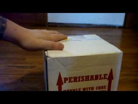 Backwater reptiles unboxing of three new T's with a very bad and sad review!
