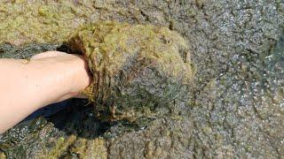 АНАПА и ДЖЕМЕТЕ погода ГНИЛЬ ВОНЬ центрального пляжа ПОЛЕЗНЫЕ ВОДОРОСЛИ ? Черного моря 27 июня 2018