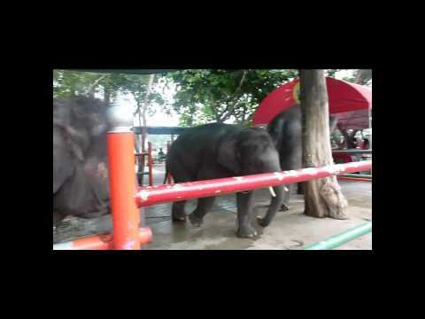 A visit at Dusit Zoo - Bangkok - Thailand