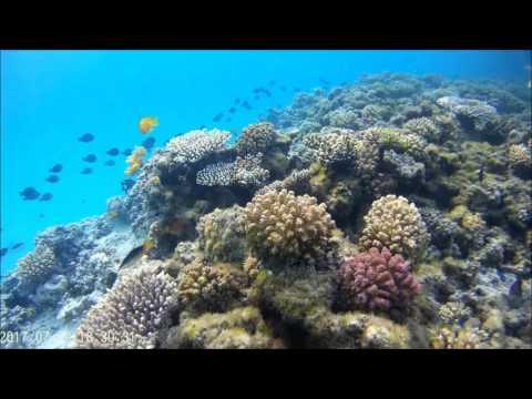 Egipt 2017 Hurghada   Podwodny świat przy Hotelu Hilton Long Beach