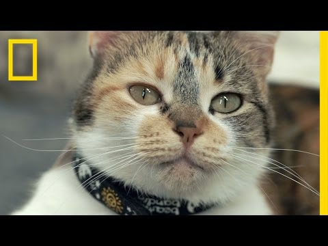 The Science of Meow: Study to Look at How Cats Talk | National Geographic