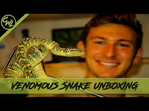 VENOMOUS SNAKE UNBOXING  Ep.1  Chandler's Wild Life