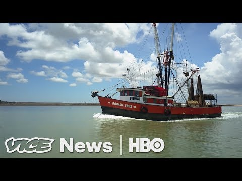 Staffing Shrimp Boats & Al Gore Returns: VICE News Tonight F