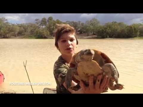 Thumbnail: Miller Wilson - Wild Animals, Fishing, Sharks, lizards, Eels and Snakes .