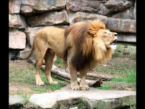 Harmonic 313 (aka Mark Pritchard) - Lion