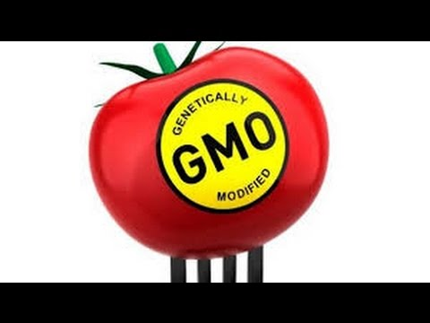 What are the effects of gmo's