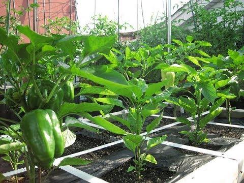 598 -जनवरी, फरबरी मे लगाए जाने वाली सब्जियां /Vegetables to be grown during January, February (Hindi