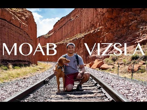 Moab Adventures With My Vizsla Dog - VIDEO 100