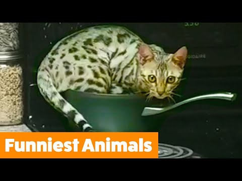 Try Not To Laugh Funny Animals | Funny Pet Videos
