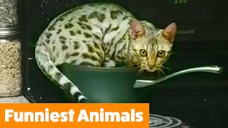 try-not-to-laugh-funny-animals-funny-pet-videos