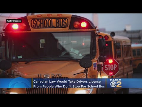 Chuck and Kelly - New York Needs this Canadian Law for Those Who Illegally Pass School Buses