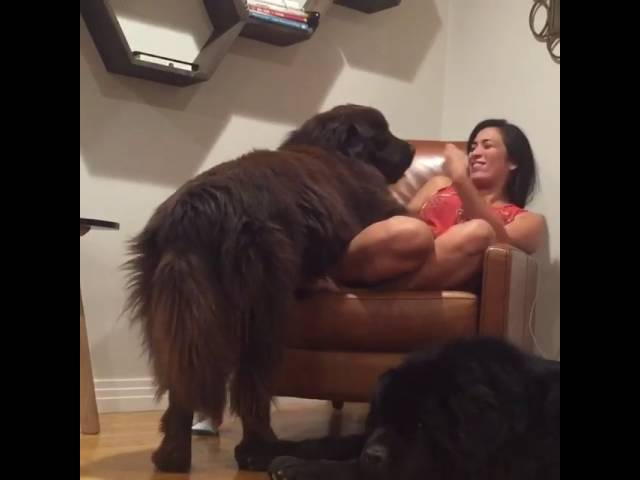 Sly Dog Steals Kiss