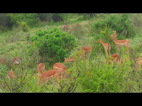 African River Wildlife Cam 03-15-2018 00:36:30 - 01:36:31