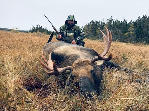 Moose Hunt Newfoundland Fall 2018 Part 2 (R Rated)