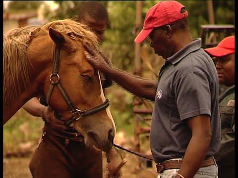 "ENOS MAFOKATE - the life & dedication of Soweto horseman ""exraordinaire"" Enos Mafokate."