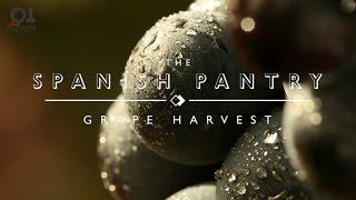 The Spanish Pantry: Grape Harvest