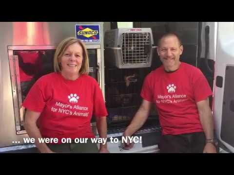 Wheels of Hope Transports #IrmaPets to NYC - September 24, 2017