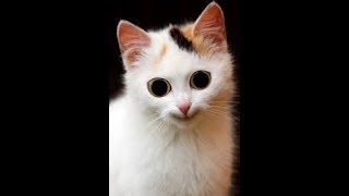 CATS+Funny+CAT+compilation