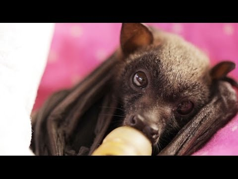 Ruby The Flying Fox
