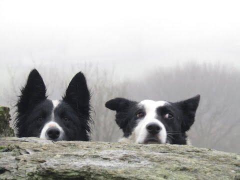 sheepdog training west Cork Ireland