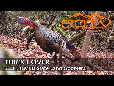 Turkey Hunting –  THICK COVER GOBBLERS self filmed on Public Land