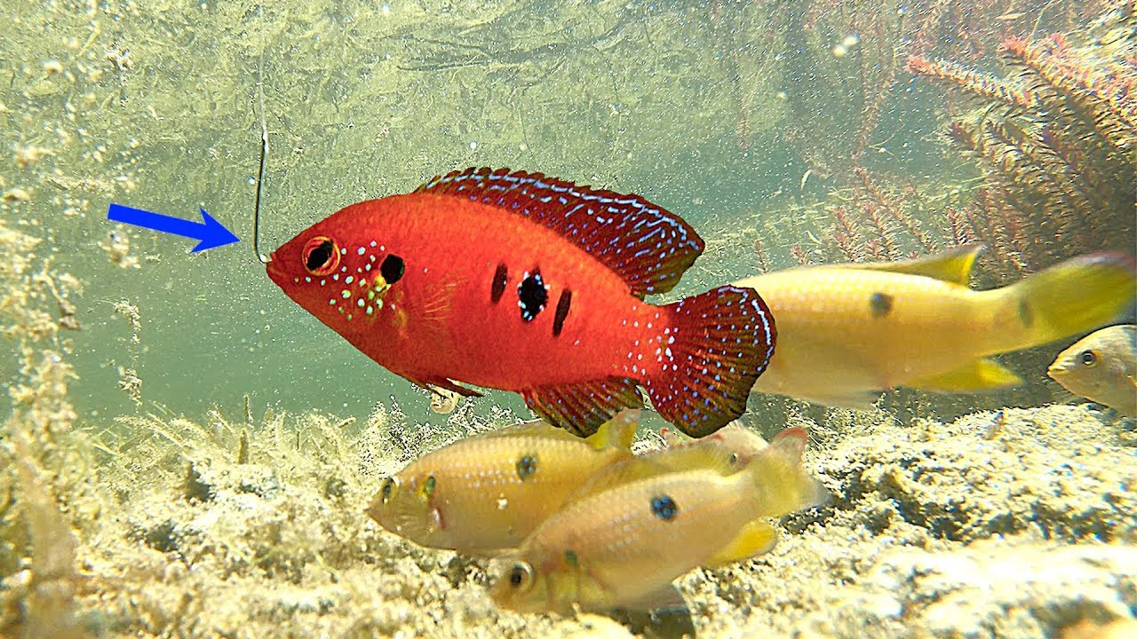 Micro Fishing Challenge! Catching Wild Aquarium Fish for Bait!