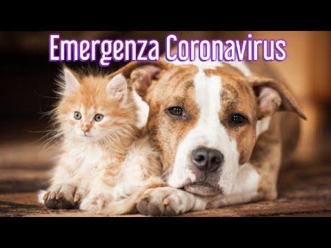 Emergenza Coronavirus Cane E Gatto PlayDog&Cat