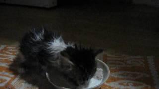 Котенок начал сам кушать