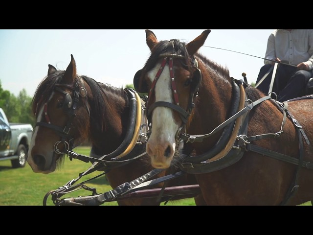 World Polo Championships in Sydney