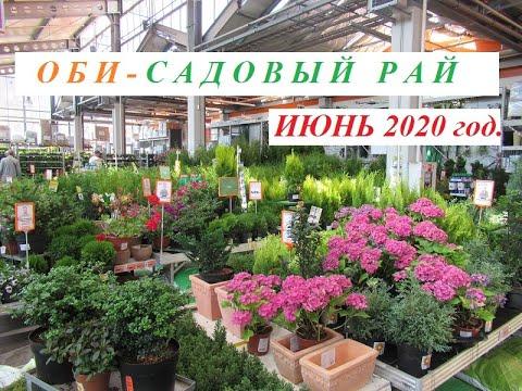 ОБИ - Садовый Рай. ИЮНЬ 2020 г. Цветы и хвойные растения, цены.