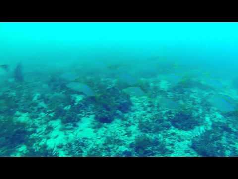 20 miles offshore... Pompano?