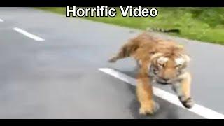 Watch: Lion chases tourist vehicle at Atal Bihari Vajpayee Zoological park in Karnataka