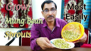 How to Grow Mung Bean Sprouts Most Easily