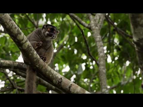 Madagascar | Life On The Edge