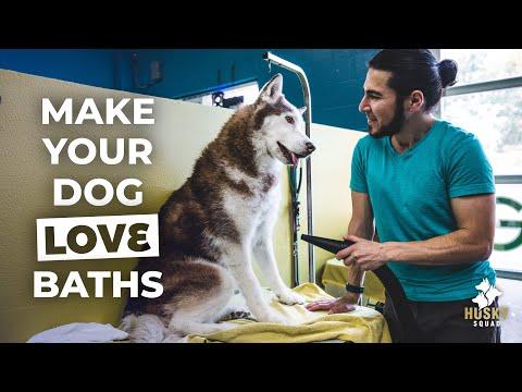 How To Bathe Your Siberian Husky Part 2 | Husky Squad
