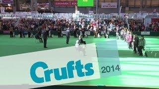 Obedience Dog Championships | Short Highlights | Crufts 2014