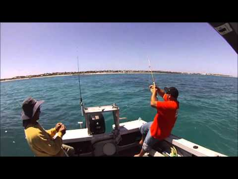 perth king george whiting boat fishing