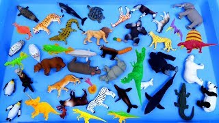 Lots of Zoo Animals Toys, Sea animals Farm animlas, Learn animals names video for kids