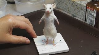 Mouse Taxidermy Tutorial by Le Heart Design