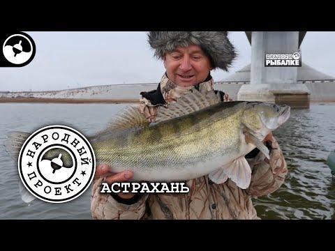 Судак. Щука. Сом. Рыбалка в Астрахани | Народный проект