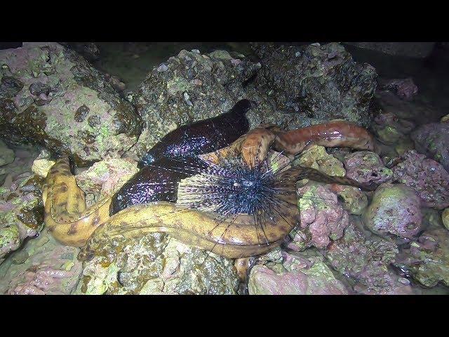 海南半夜太凉爽,礁石区海货集体出洞乘凉,阿彬独自一人抓爽了