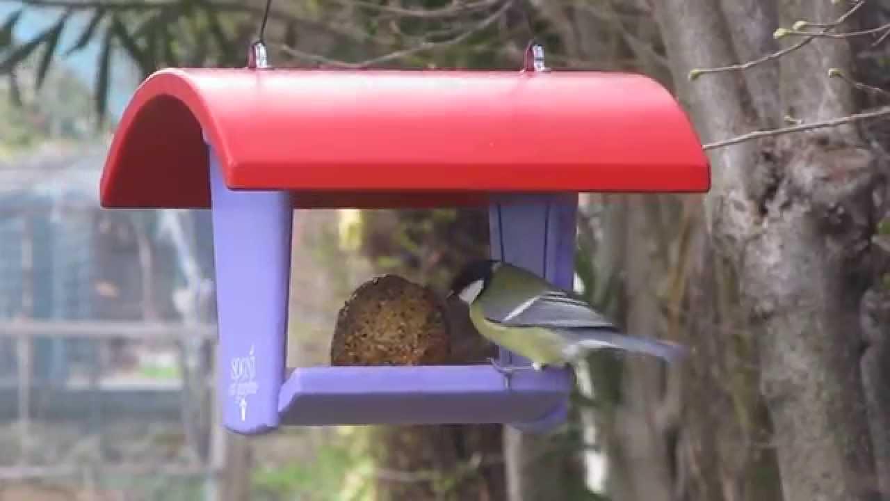 Come attirare uccelli alla mangiatoia  Bird House Feeder