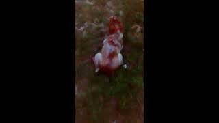 Sacando a kela y soltandola pa que corra en el parque del pinar