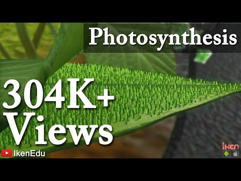 What is the relationship between photosynthesis in plants and respiration of animals
