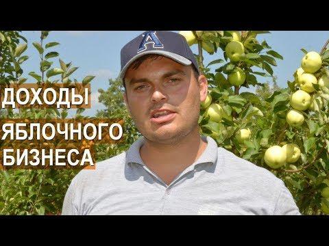 Вопрос: Выращивают ли в Казахстане яблоки в промышленном масштабе, где?