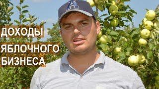 Фермер Василе Берзой. Расходы при старте бизнеса по выращиванию яблок.