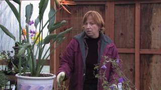 Gardening Tips & Flowers : How to Prepare Perennials for Winter